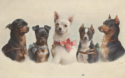 Postcard, favourite dogs - toy terriers