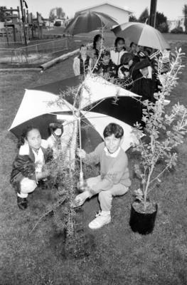 Gail Titi and Phillip Ripia, Tree Planting, Richmond School, Napier