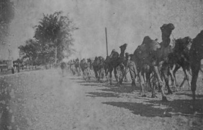 Troop column with camels