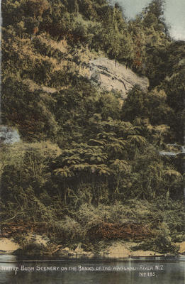Native bush scenery on the banks of the Wanganui River