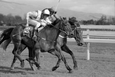 Air Hill Stud Steeplechase, Gene Andrew and John McGilford
