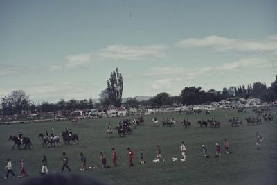 Showday at Tomoana Showgrounds, parade of equestrian riders