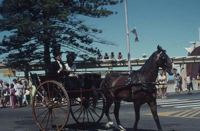 Napier Centennial parade, horse and carriage