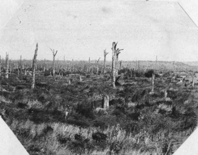 On the Somme, High Wood