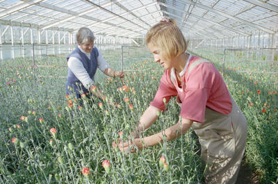 Kay Knowles and Juliet Simmons, Flowerland, Clive, Hawke's Bay