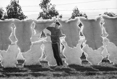Brent Horton, Classic Sheepskins, Pandora