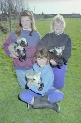 Cooper Children and Piebald Lambs, Meeanee, Napier