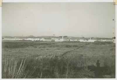 Pirimai, Napier