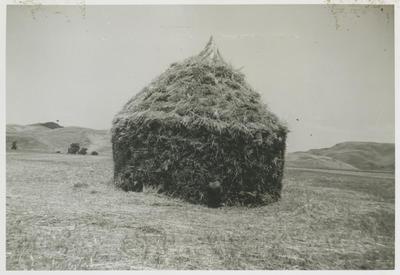 Haystack, Raukawa