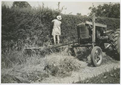Noel Fraser's neighbour Harry Clark trimming his hedge, Greenmeadows, Napier