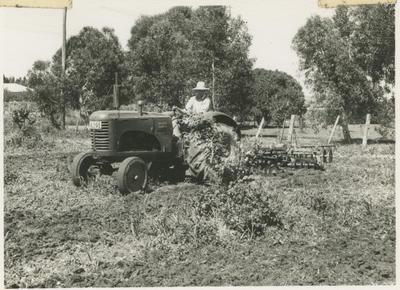 Noel Fraser on his tractor, Greenmeadows, Napier