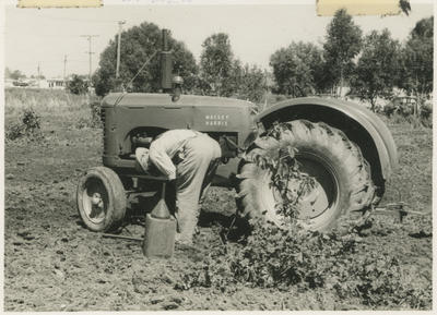 Noel Fraser working on his tractor, Greenmeadows, Napier