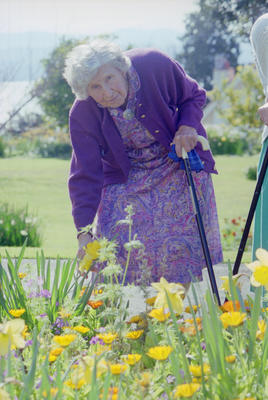 Unidentified Woman Picking Daffodils, Resthaven Eventide Home, Napier