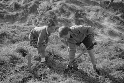 Students Planting Trees, Taradale
