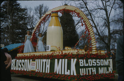 Hastings Blossom Festival, Blossom With Milk float