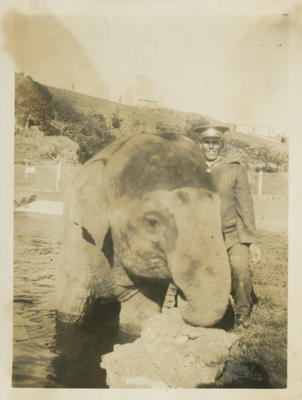 Elephant at Auckland Zoo