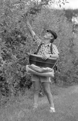 Sean Burley, McKelvie's Orchard, Meeanee Road, Napier