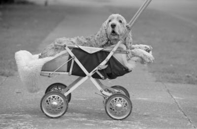 Orquist Family Dog, Judge