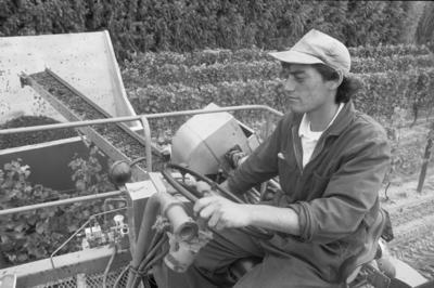 Hawke's Bay Winemakers Harvester operator Ashley Andrew