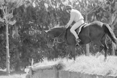 Puketapu Pony Club member Tim McDougall