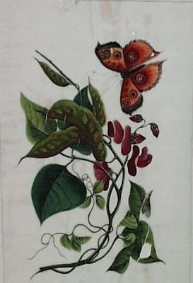Untitled - flowers and butterfly