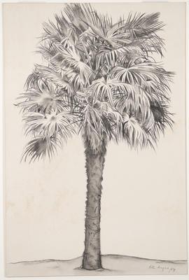 Untitled - palm tree