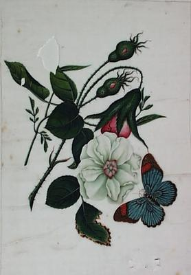 Untitled - roses and butterfly