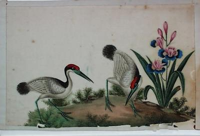 Untitled - birds and an iris