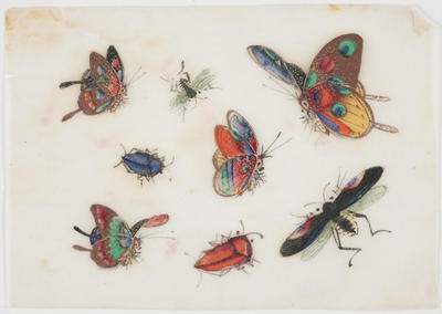 Untitled - butterflies and beetles