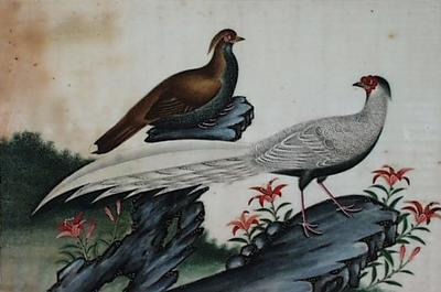 Untitled - Chinese pheasants on a rock with flowers