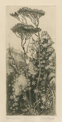 Collection of Hawke's Bay Museums Trust, Ruawharo Tā-ū-rangi, 63/199/7