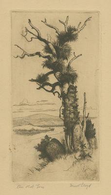 Collection of Hawke's Bay Museums Trust, Ruawharo Tā-ū-rangi, 63/199/10