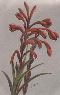 Postcard, Red flax flower