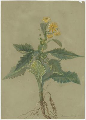 Collection of Hawke's Bay Museums Trust, Ruawharo Tā-ū-rangi, 48/4/64