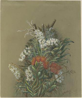Orchid and rātā