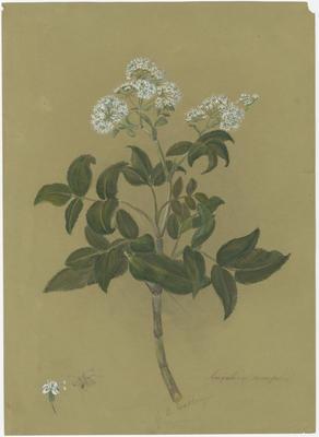 Collection of Hawke's Bay Museums Trust, Ruawharo Tā-ū-rangi, 48/4/7