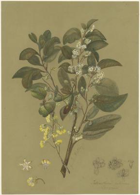 Collection of Hawke's Bay Museums Trust, Ruawharo Tā-ū-rangi, 48/4/35
