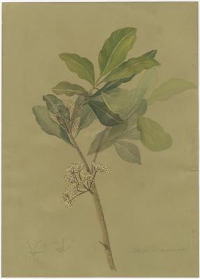 Collection of Hawke's Bay Museums Trust, Ruawharo Tā-ū-rangi, 48/4/50