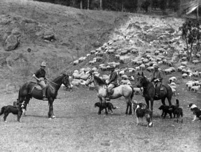Shepherds, Maraekakaho Station