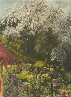 Gardens, McLean Residence, Napier; A B Hurst & Son