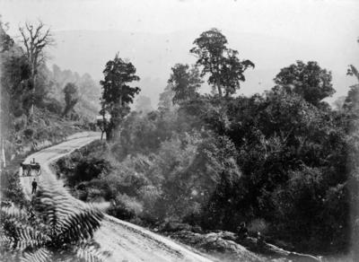View of road through bush