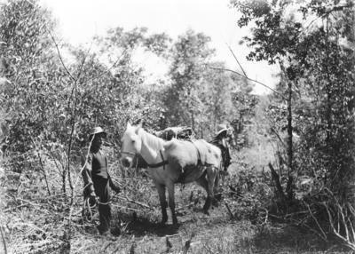 Expedition to Ruakituri