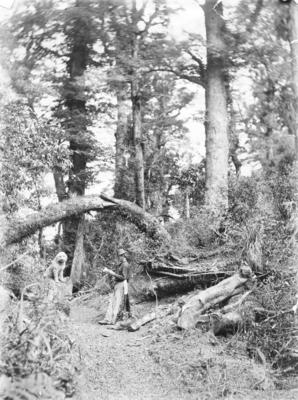 Unidentified man with dogs in a bush setting