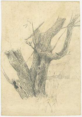 Untitled - sketch of a tree trunk