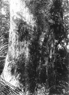 Tree, Lake Waikareiti, Hawke's Bay