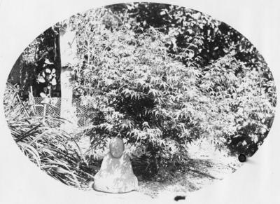 Garden scene, unidentified location
