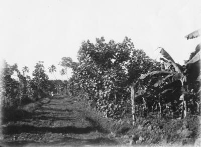 Road, Samoa