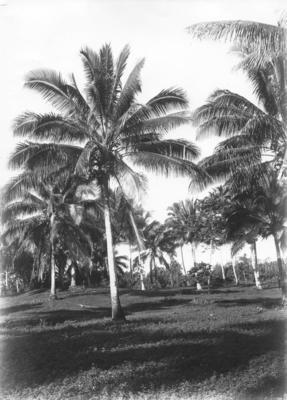 Collection of Hawke's Bay Museums Trust, Ruawharo Tā-ū-rangi, 16065
