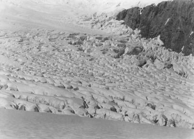 Fox Glacier Neve