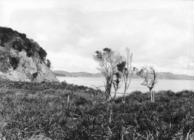 Moturua Island, Bay of Islands